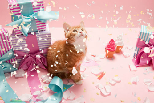 Catbirthday GettyImages 98843437 5907f9015f9b5864706d4cef