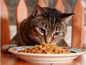 сухой корм для кошек в домашних условиях