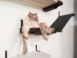 настенный комплекс для кошек