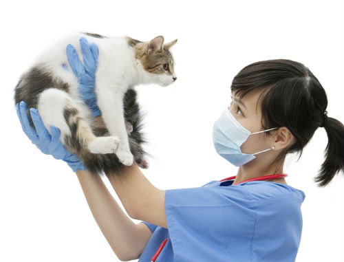 does a cat need to see a vet as often as a dog f