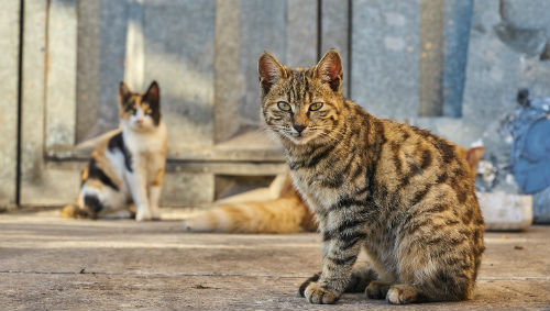 should feral cats be tamed 4