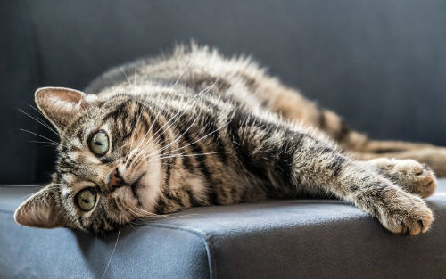 what causes ringworm in cats canna pet 800x500 1