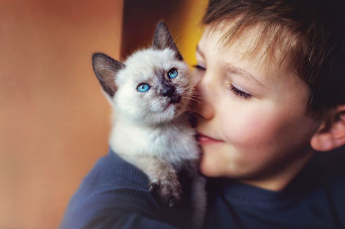 young boy with a kitten on his shoulder 641586594 5c07c97ec9e77c0001630310